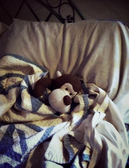 Lazy Monkey!
