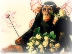 The Spirit Of Monkey Contentment! image from photoshoppix.com