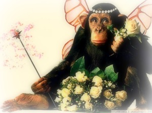 The Spirit Of Monkey Contentment! image from photoshoppix.com