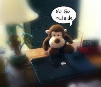 Do something else today, less hairy monkey!