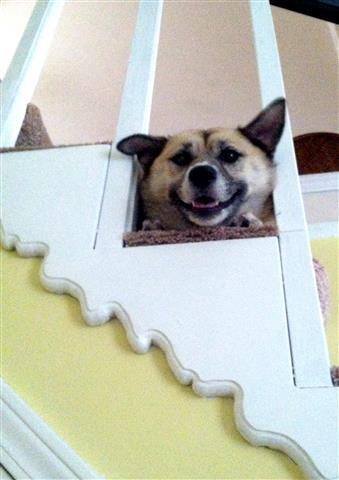 Sunshine the smiling dog...