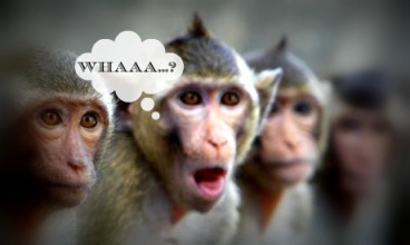 surprised monkeys