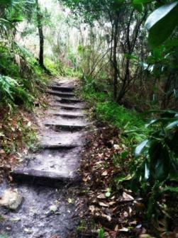 steps (Small)