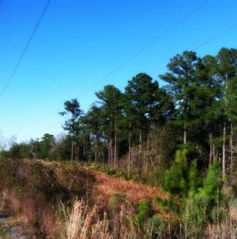The preserve is a great place to hike, or to fight fire ants.